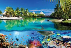 Fotobehang Tropical Island Dolphins Paradise