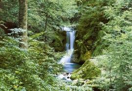 Fotobehang Idealdecor 00279 Waterfall in Spring