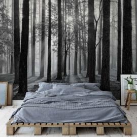 Fotobehang Zonsopgang in het Bos Zwart Wit