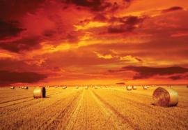 Fotobehang Gold platteland