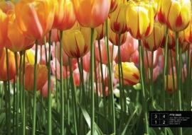 Fotobehang AG Design FTS0045 Tulip Big