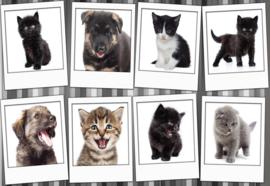 Fotobehang Pups en kittens