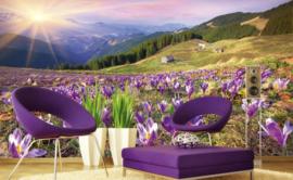 Fotobehang Krokussen in de lente