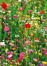 Fotobehang Idealdecor 00375 Flower Field