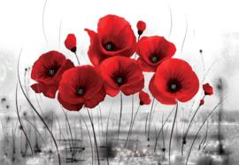 Fotobehang Red Poppies