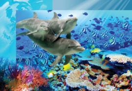 Fotobehang Dolfijnen in tropisch water