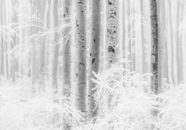 Komar Raw R4-043 Winter Wood