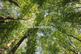 Fotobehang AP Digital 470105 Canopy