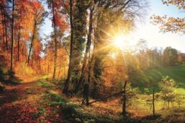 Fotobehang Wandelpad door het bos