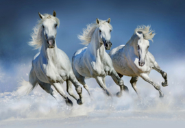 Fotobehang Idealdecor 00162 Arabian Horses