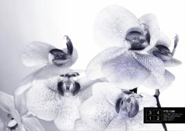 Fotobehang AG Design FTS1306 Orchidee