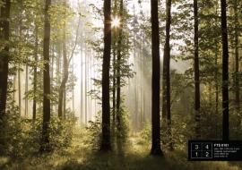 Fotobehang AG Design FTS0181 Morgenzon in bos