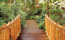 Fotobehang Bamboe brug