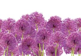 Fotobehang Paarse bloemen