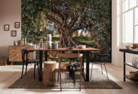 Komar National Geographic fotobehang 8-531 Olive Tree