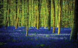 Fotobehang Bomen en Veld met Blauwe Bloemen