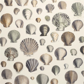 John Derian for Designers Guild PJD6000/02 Captain Thomas Brown's Shells