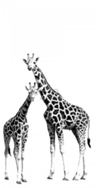 Esta photowall XL2 for kids 158701 Giraffes