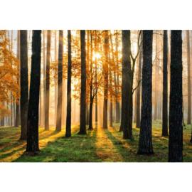 Fotobehang Zonsopgang in het Bos