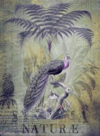 Fotowand Peacock jungle 2 by Andrea Haase afm. 200cm x 270cm hoog