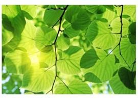 Fotobehang Groene bladeren