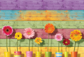 Fotobehang Sunny Flowers
