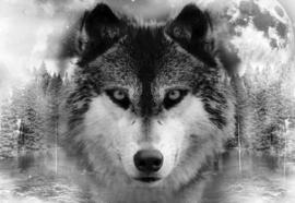 Fotobehang Wolf in bos