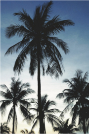 Esta photowall XL2 for kids 158849 Palmtrees blue