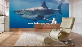 Fotobehang AP Digital 470097 White Shark