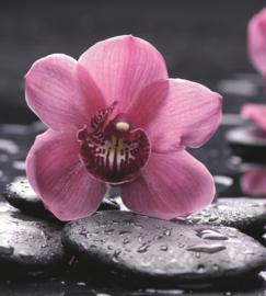 Fotobehang Orchidee