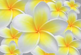 Fotobehang Floral Pattern