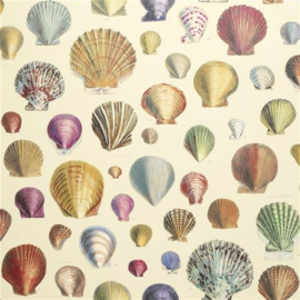 John Derian for Designers Guild PJD6000/01 Captain Thomas Brown's Shells