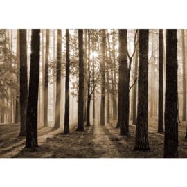 Fotobehang Zonsopgang in het Bos Sepia