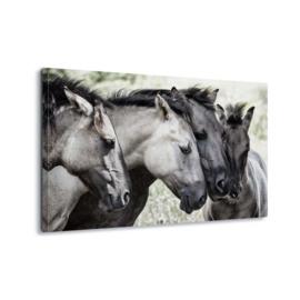 Canvasdoek Paarden