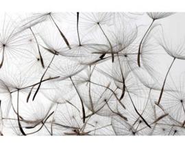 Fotobehang Paardenbloem zaadjes