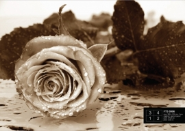 Fotobehang AG Design FTS0086 Black & White Rose