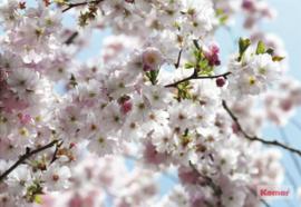 Komar 'National Geographic' fotobehang 8-507 Spring