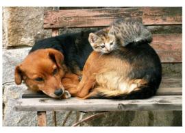 Fotobehang Kat en hond