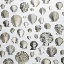 John Derian for Designers Guild PJD6000/03 Captain Thomas Brown's Shells