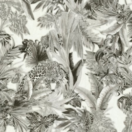 Roberto Cavalli Wallpaper RC18006