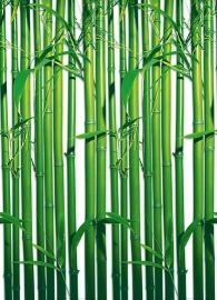 Fotobehang Idealdecor 00421 Bamboo