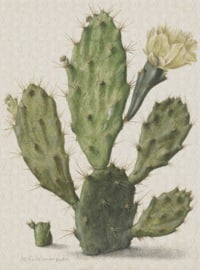 Dutch Painted Memories 8013 Blooming cactus Herman Saftleven