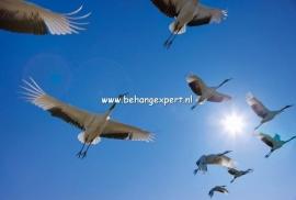 Fotobehang AP Digital 470096 Fly Away