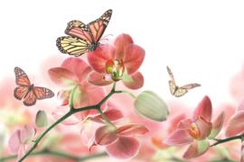 Fotobehang Orchideeën en vlinder