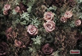 Komar 'Beauties' 8-980 Velvet