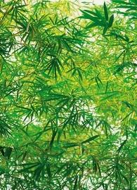 Fotobehang Idealdecor 00372 Bamboo