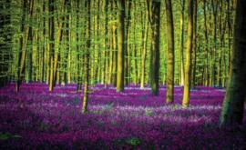 Fotobehang Bomen en Veld met Paarse Bloemen