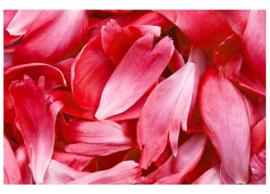 Fotobehang Rode bloemblaadjes