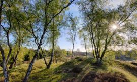 Fotobehang Holland 3495 - Berkenbossen bij de Mossel
