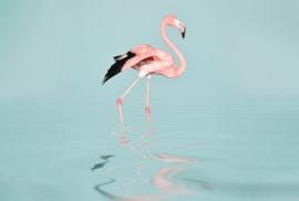 Fotowand Flamingo water by Andrea Haase afm. 400cm x 270cm hoog